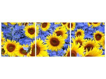 Obraz slunečnic (F000619F15050)
