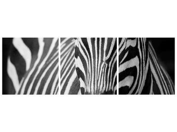 Obraz černobílého detailu zebry (F000715F15050)