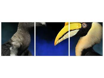 Obraz ptačích zobáku (F001358F15050)