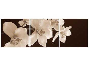 Krásný obraz bílých květin (F001888F15050)