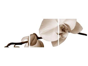 Krásný obraz bílé orchideje (F001900F15050)