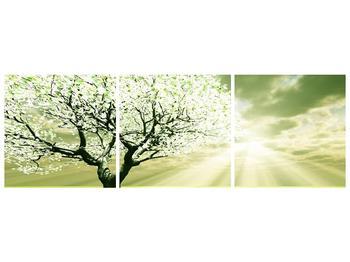 Obraz stromu na jaře (F002291F15050)