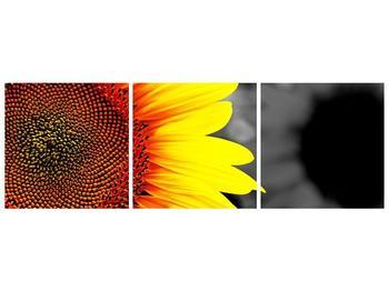Obraz květu slunečnice (F002400F15050)