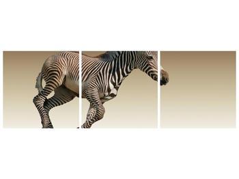 Obraz běžící zebry (F002416F15050)