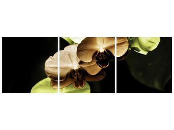 Obraz hnědých a zelených orchideí  (F002723F15050)