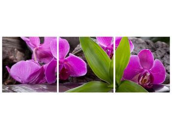 Obraz fialových orchidejí s listím (F004027F15050)