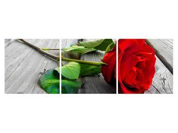 Obraz červené růže (K011140K15050)