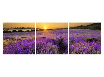 Tablou cu câmp de levandă (K011154K15050)