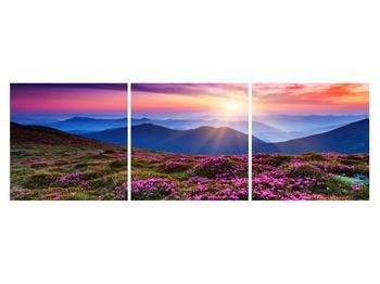 Obraz horské rozkvetlé krajiny (K011322K15050)