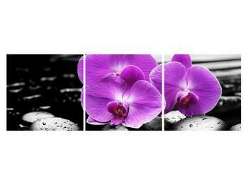 Obraz květů orchideje (K011379K15050)