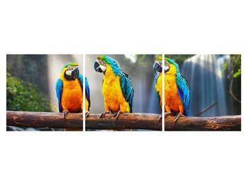 Obraz papoušků (K011994K15050)
