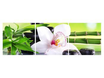 Obraz orchideje (K011995K15050)