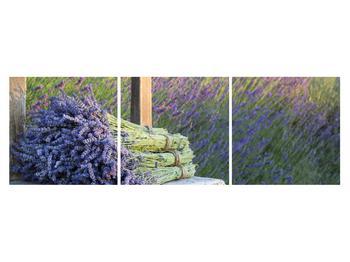 Obraz levandulových svazků (K012032K15050)