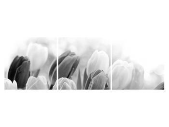 Černobílý obraz pučících tulipánů (K012127K15050)