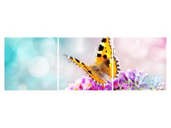 Obraz motýla na květech (K012351K15050)