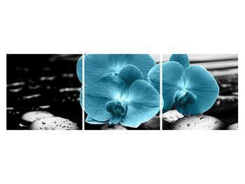 Tablou cu flori de orhidee albastre (K012398K15050)