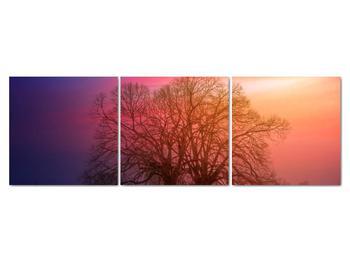 Obraz stromov v hmle (V020088V15050)