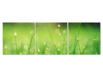 Obraz - rosa na tráve (V020169V15050)