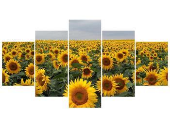 Obraz slunečnicového pole (F000397F150805PCS)
