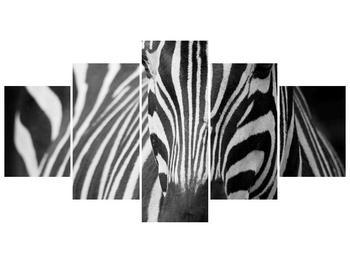 Obraz černobílého detailu zebry (F000715F150805PCS)