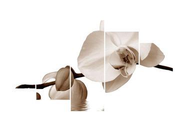 Krásný obraz bílé orchideje (F001900F150805PCS)