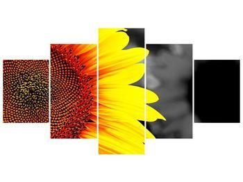 Obraz květu slunečnice (F002400F150805PCS)