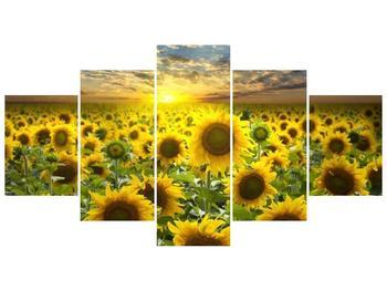 Obraz slunečnic při západu slunce  (F002612F150805PCS)