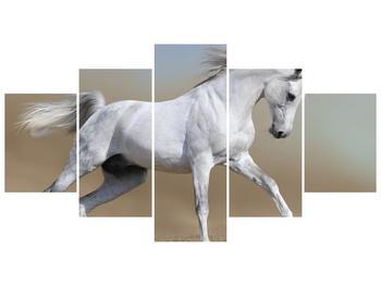 Obraz bílého koně v pohybu  (F002629F150805PCS)