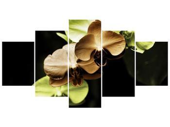 Obraz hnědých a zelených orchideí  (F002723F150805PCS)
