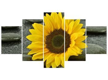 Pětidílný obraz F005794F150805PCS (F005794F150805PCS)