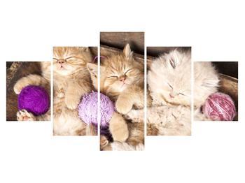 Obraz spících koťat (K014996K150805PCS)