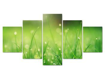 Obraz - rosa na tráve (V020169V150805PCS)