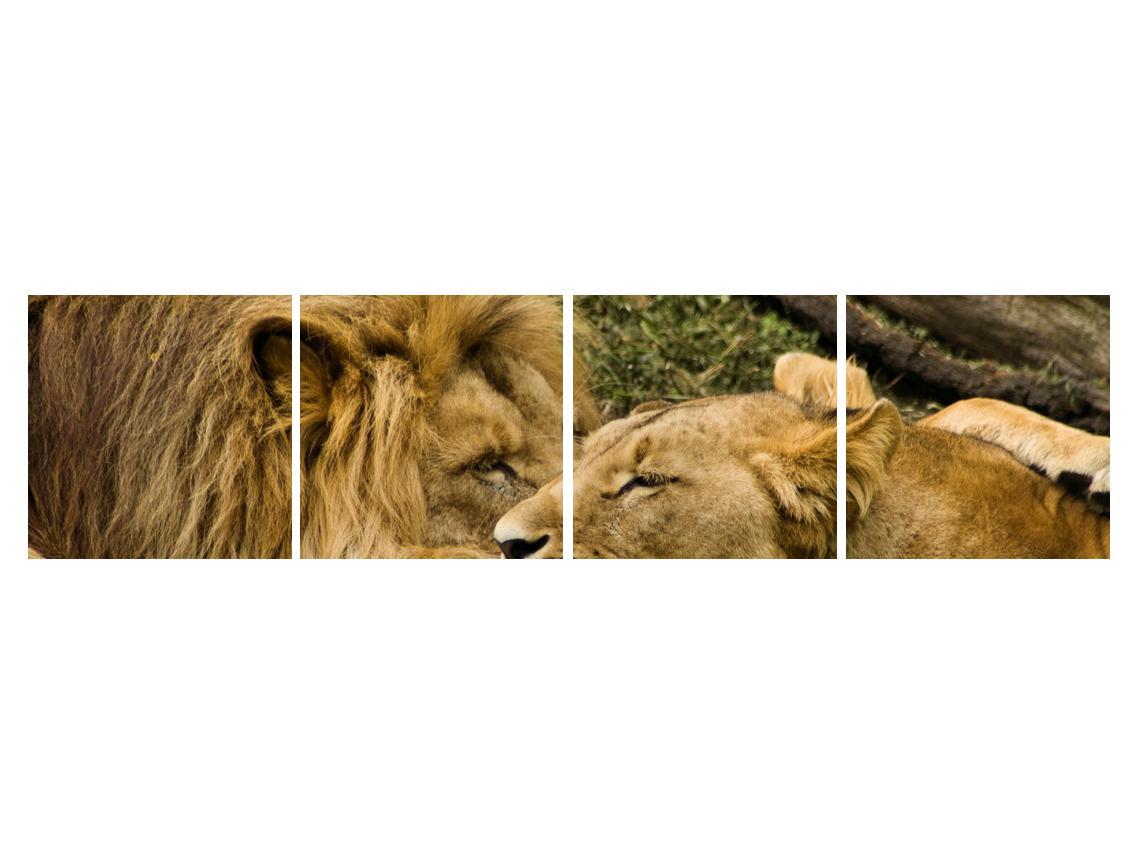 Moderna slika K010140K16040 (K010140K16040)