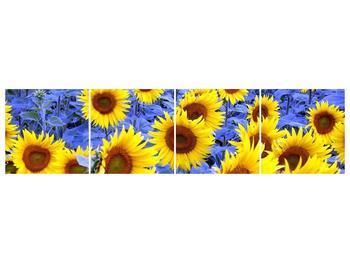 Obraz slunečnic (F000619F16040)