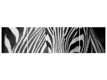 Obraz černobílého detailu zebry (F000715F16040)