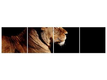 Obraz lva (F001402F16040)