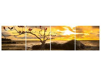 Obraz suchého stromu (F001464F16040)
