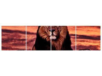 Obraz krále zvířat (F001507F16040)