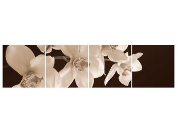 Krásný obraz bílých květin (F001888F16040)