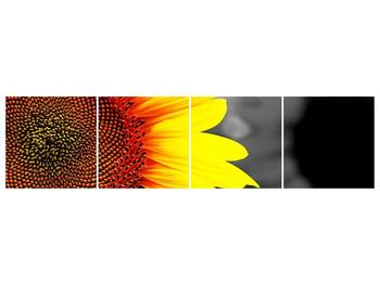 Obraz květu slunečnice (F002400F16040)