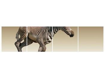 Obraz běžící zebry (F002416F16040)