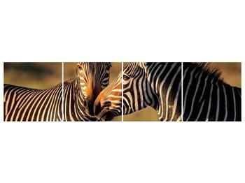 Obraz dvou zeber  (F002641F16040)