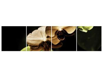 Obraz hnědých a zelených orchideí  (F002723F16040)