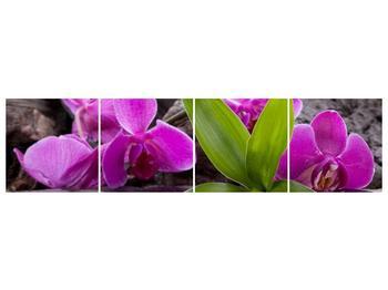 Obraz fialových orchidejí s listím (F004027F16040)