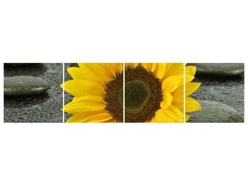 Moderní obraz F005794F16040 (F005794F16040)