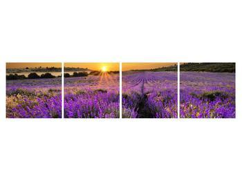 Tablou cu câmp de levandă (K011154K16040)
