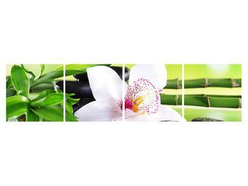 Obraz orchidee (K011995K16040)