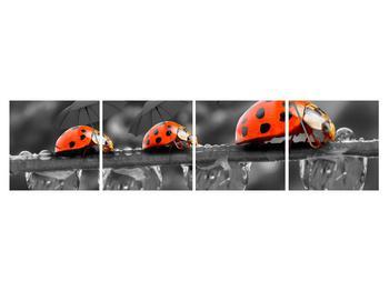 Obraz lienok sedembodkových s dáždnikmi (K012059K16040)