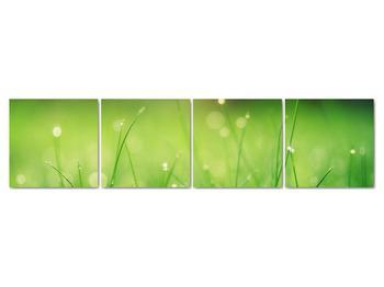 Obraz - rosa na tráve (V020169V16040)
