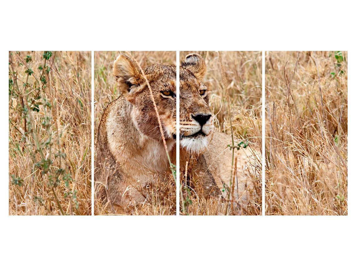 Moderna slika K011559K16080 (K011559K16080)